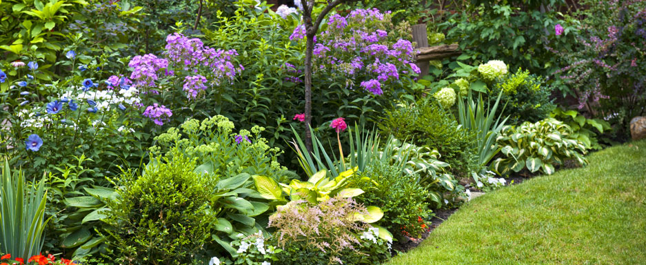 Beautiful shrubs with comprehensive bug control with the help of Royal Turf Custom Lawn Care. A beautiful landscape requires customized spring, summer, fall, and winter shrub care treatments and we can help!